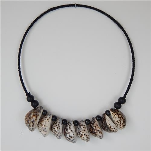 Coma 8 Cowrie Shell