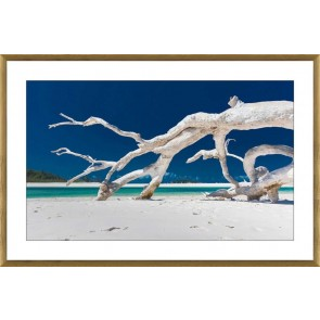 Driftwood Print in Glass