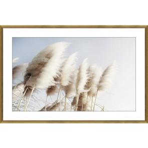Pampas Grass Framed Glass Print