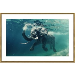 Swimming Elephant Print in Glass with Oak Frame
