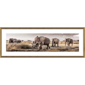 Herd Glass Framed Print