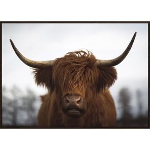 Highland Red Framed Canvas Print