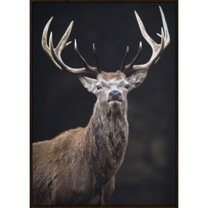 Noble Stag Framed Canvas Print