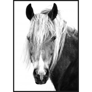Mane Man Framed Canvas Print