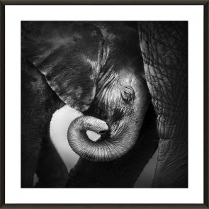 Elephant's Love Print in Glass with Frame