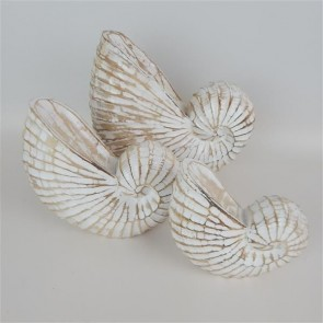 Nautilus Shells Set of 3
