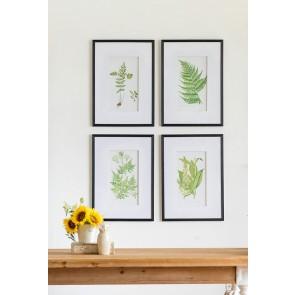 Set of 4 Fern Prints